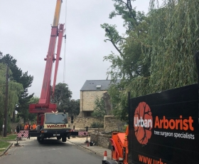 Urban Arborist's Tree removal Specialists